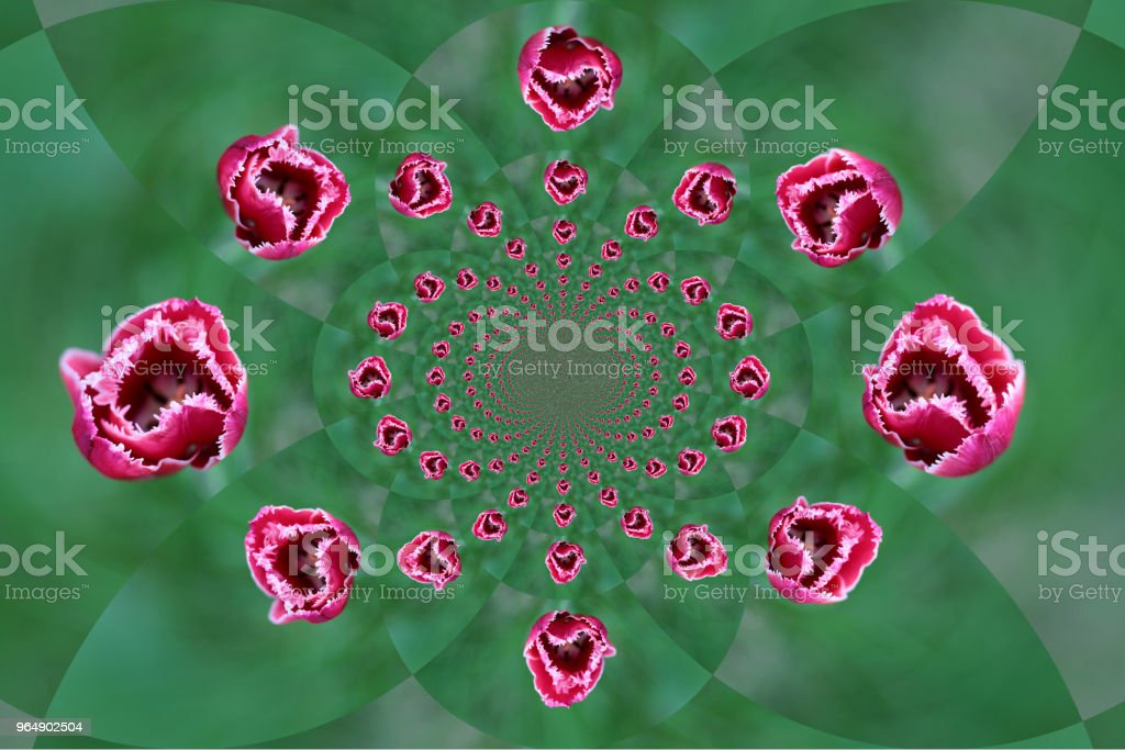 red tulip bud on blurred green backgroun royalty-free stock photo