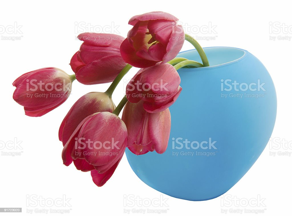 Red tulip in blue vase royalty-free stock photo