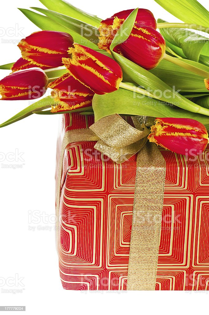 Red tulip with petals fringed by yellow and gift box royalty-free stock photo