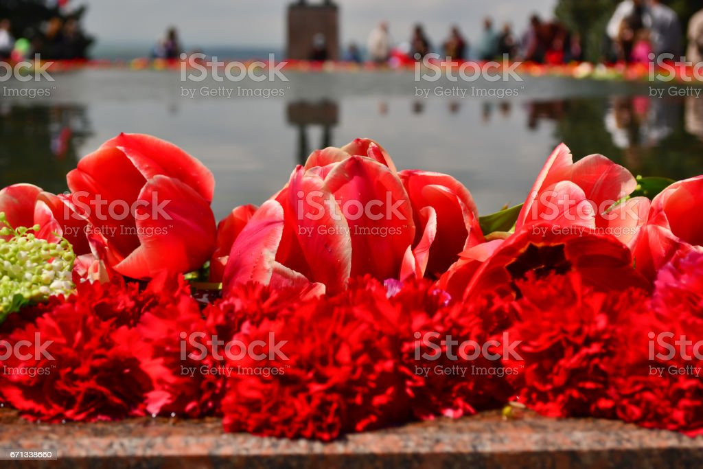 Red tulips and carnations stock photo