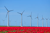 Red tulips in a field with wind turbines in the background during a beautiful spring day in Holland.