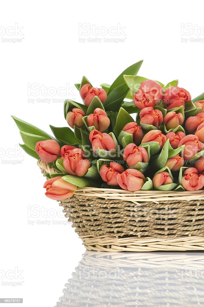 Red tulips in the basket royalty-free stock photo