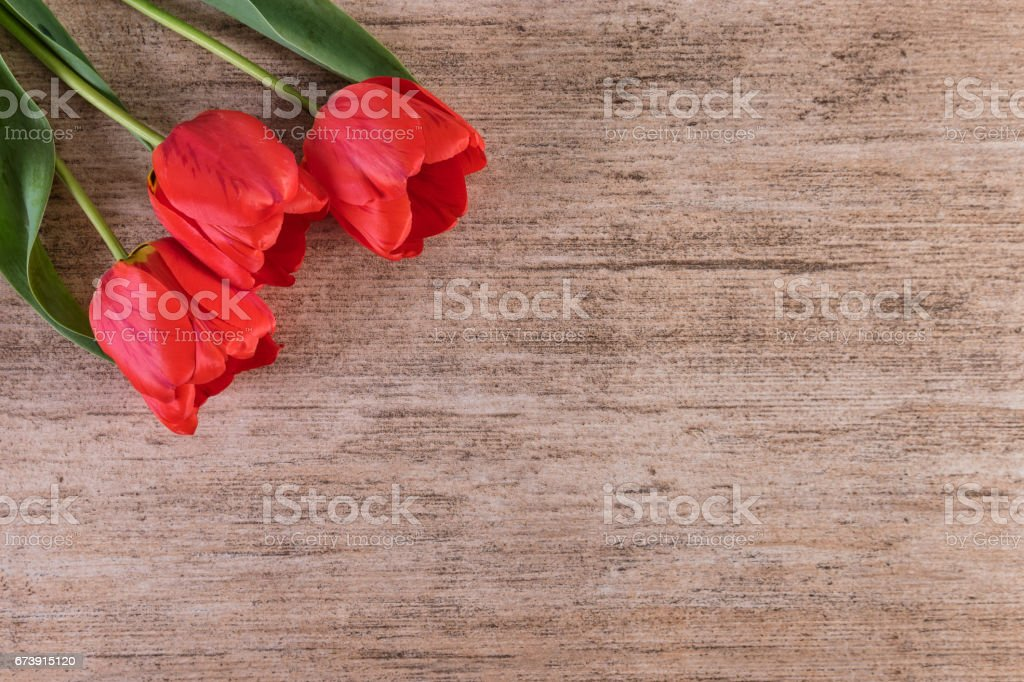 Red Tulips on light brown stone background. Minimalist style, copy space stock photo