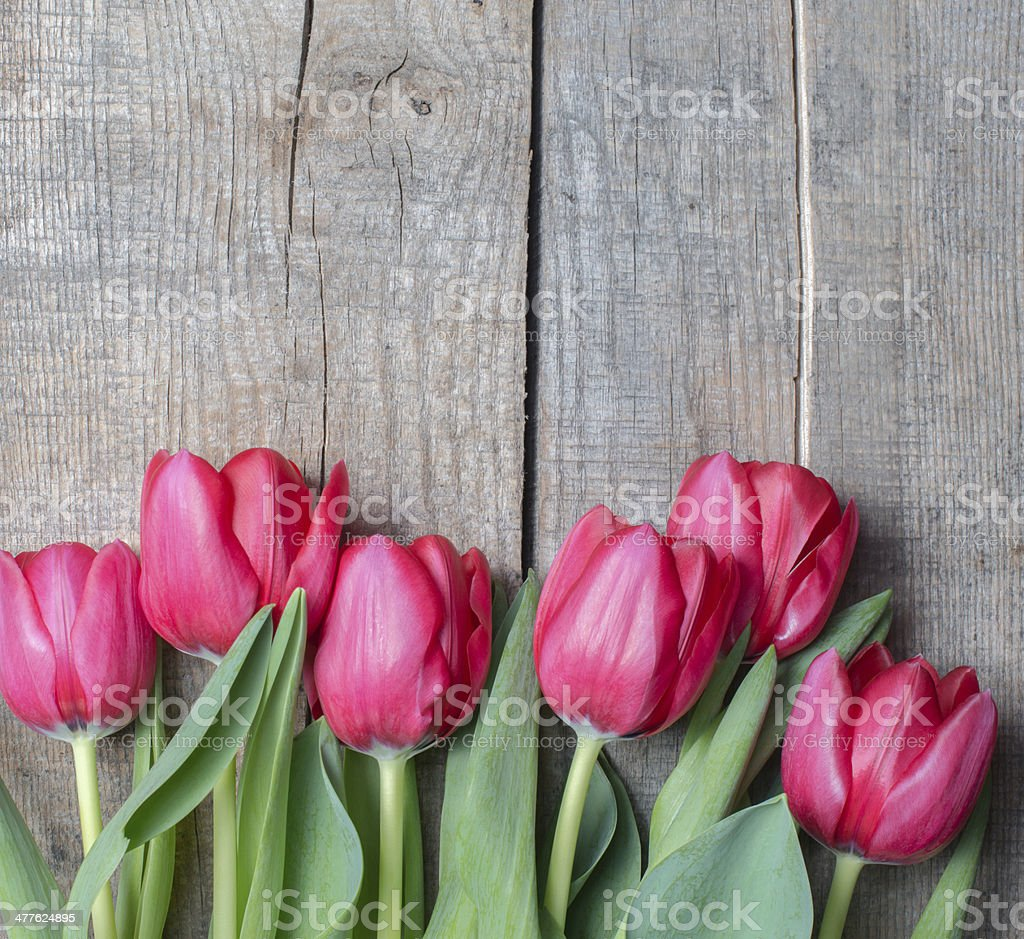 Red tulips on wooden background stock photo
