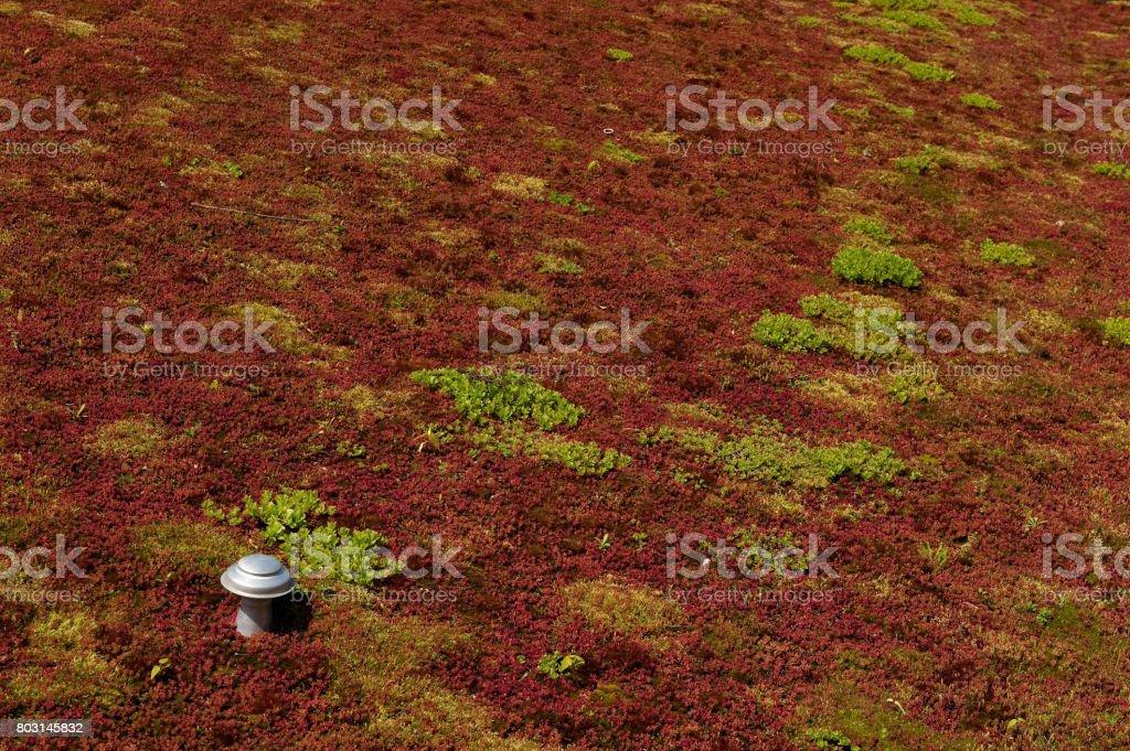 roter Vegetation auf einem Dach – Foto