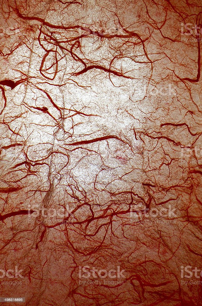 Red veins background stock photo