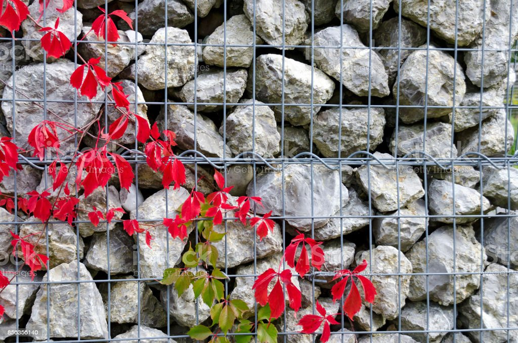 red vine leaves stock photo