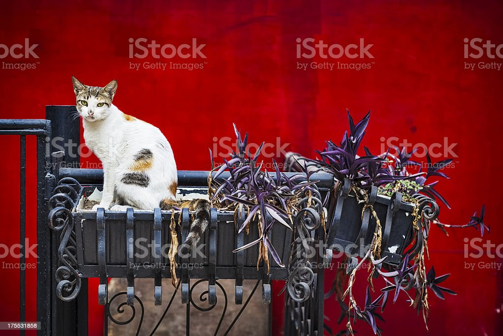 Red Wall Cat royalty-free stock photo