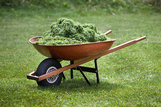 Red wheelbarrow with grass clippings stock photo