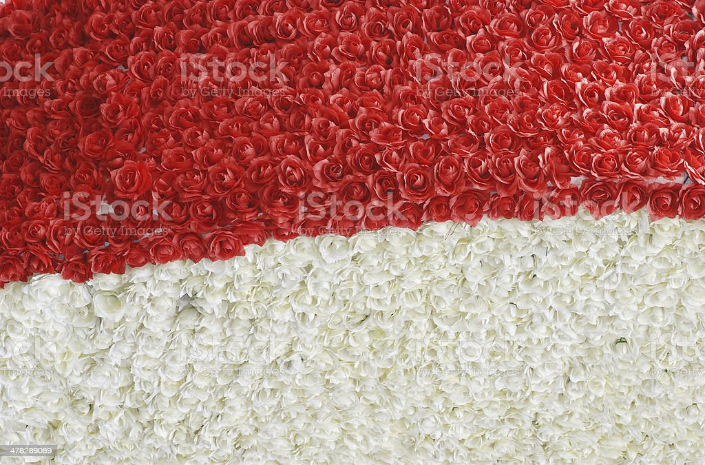 red  white rose royalty-free stock photo