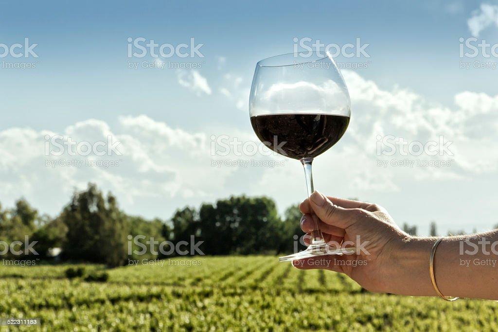 Red wine and vineyard stock photo