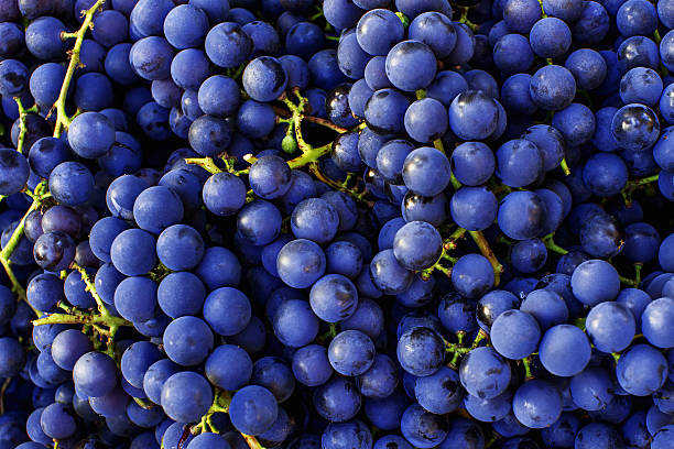 Red wine grapes background. Dark blue wine grapes. Red wine grapes background. Dark blue or wine grapes cabernet sauvignon grape stock pictures, royalty-free photos & images