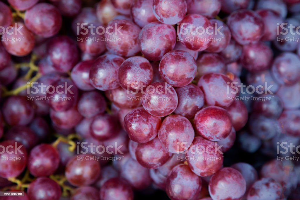 Red wine grapes background/ dark grapes, blue grapes , Red Grape , Vitis vinifera L. , VITACEAE , Cardinal Grape , Emperor Grape stock photo