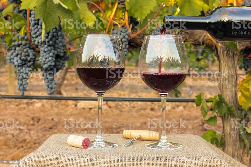Red wine poured into glasses at vineyard on harvest photo libre de droits