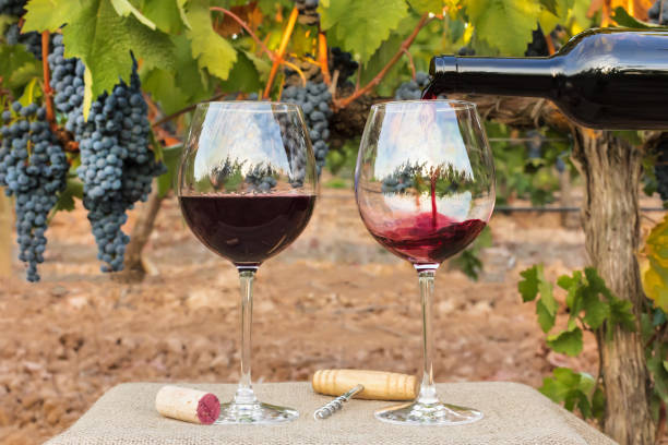 Red wine poured into glasses at vineyard on harvest stock photo