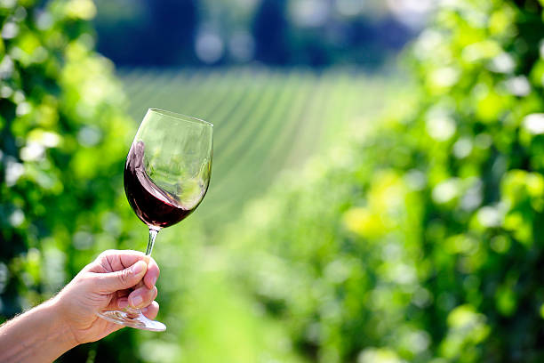 Red wine swiveling inside a glass, vineyard in background stock photo
