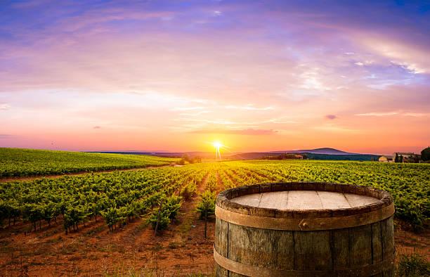 Roten Wein mit einem Holzfass auf grünen Weinberge in der Toskana, Italien – Foto