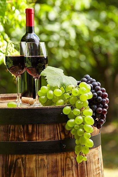 레드 와인 배럴 on 포도원입니다 녹색 Tuscany, 스톡 사진