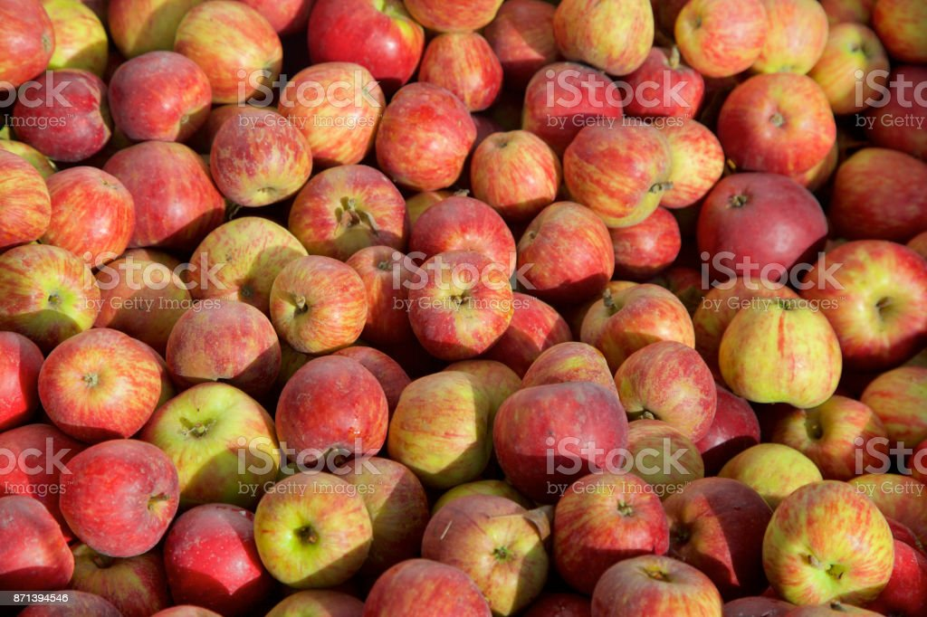 red winesap apples background stock photo