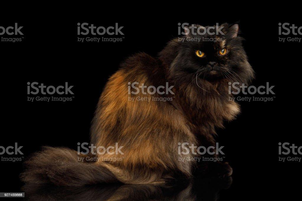 Tiny fuzzy pussy bent over