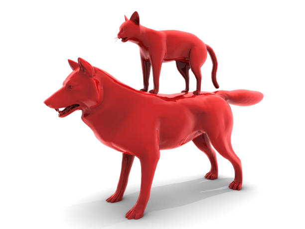 Red Wolf and Cat Friend stock photo