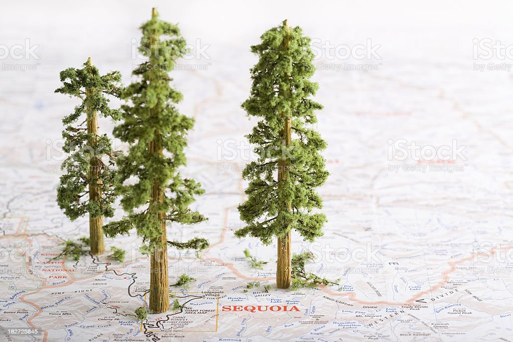 Red Wood / Giant Sequoia Trees on a Map stock photo