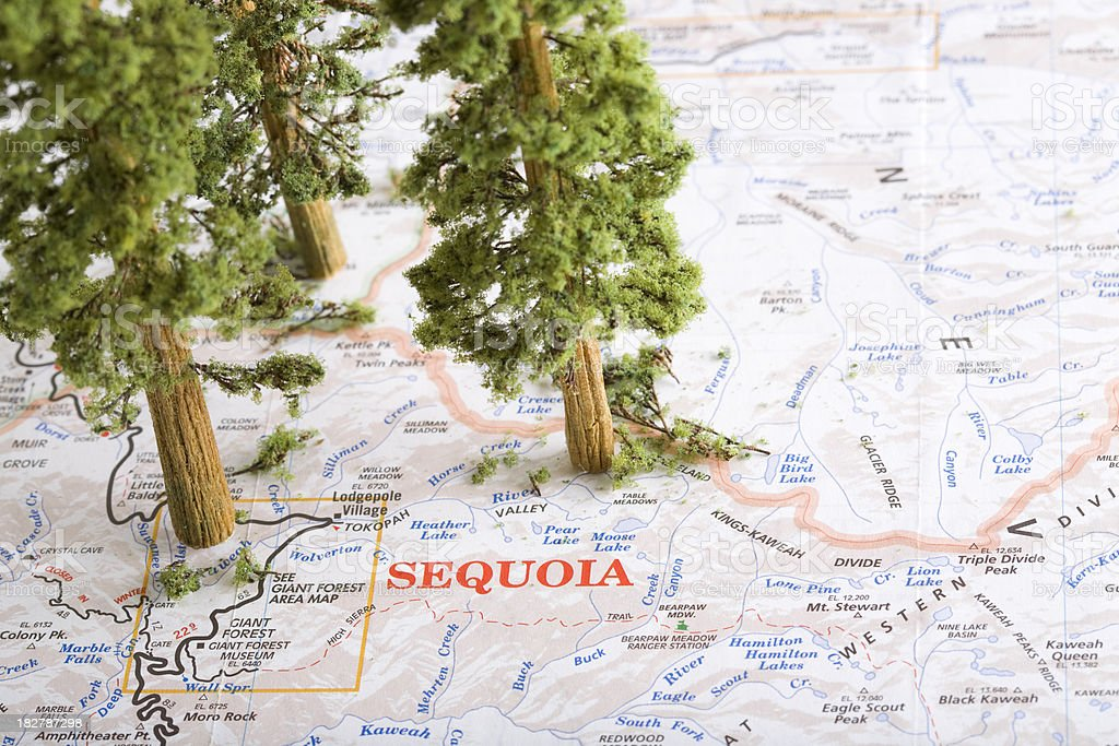 Red Wood Giant Sequoia Trees On A Map Stock Photo More Pictures Of