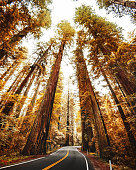 red woods forest in california