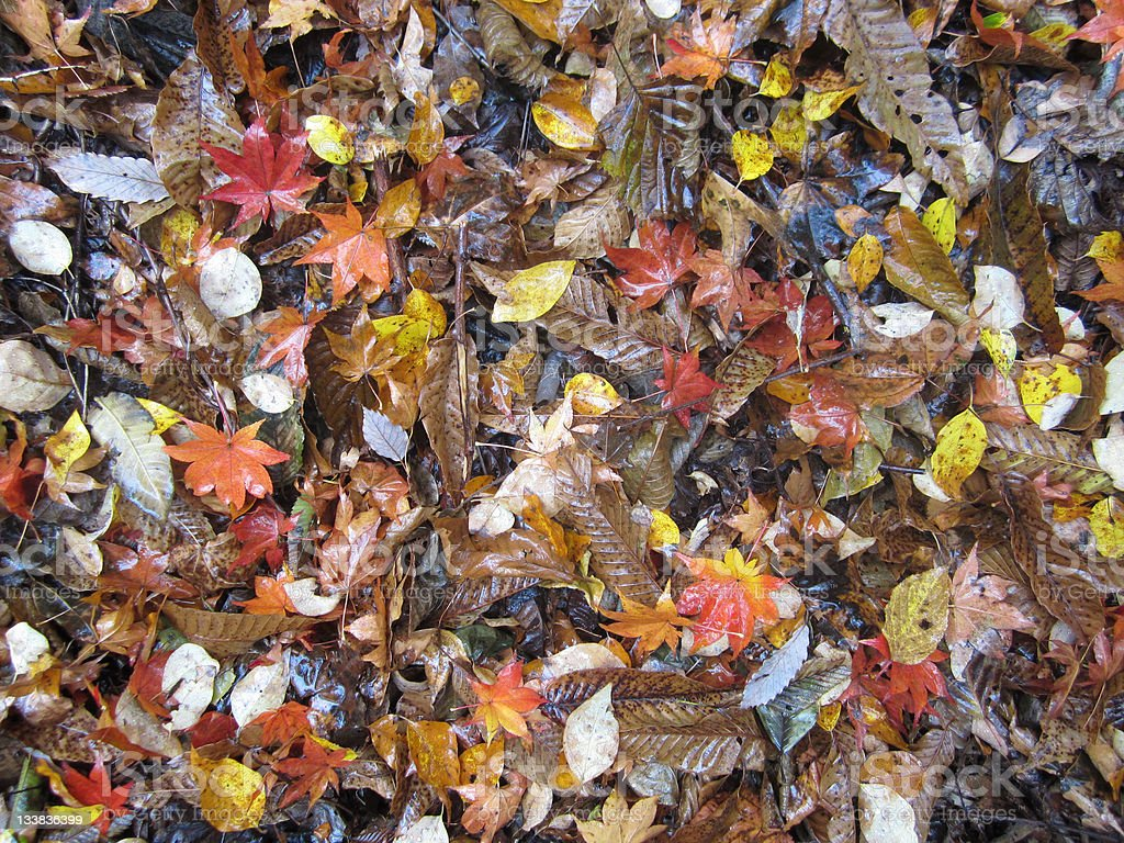 Red, Yellow, and Brown Wet Autumn Leaves stock photo