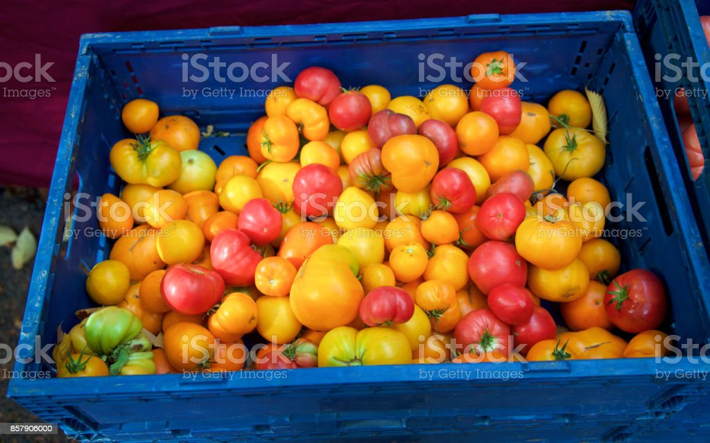 red yellow and orange tomatoes at the farmer's market stock photo