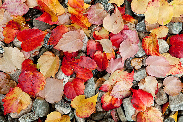 Red, Yellow and Tan Autumn Leaves on Gravel stock photo