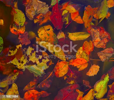 istock Red, yellow, green, brown, burgundy fallen leaves lie on the surface of the water 1176821684