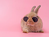 Red-brown cute baby rabbit wearing glasses sitting on pink background. Lovely action of young brown rabbit.