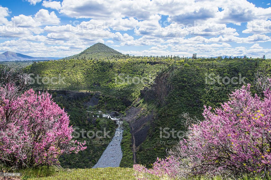 Redbuds and Cascades stock photo