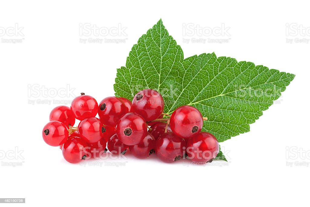 Redcurrant Berries with Green Leaf stock photo