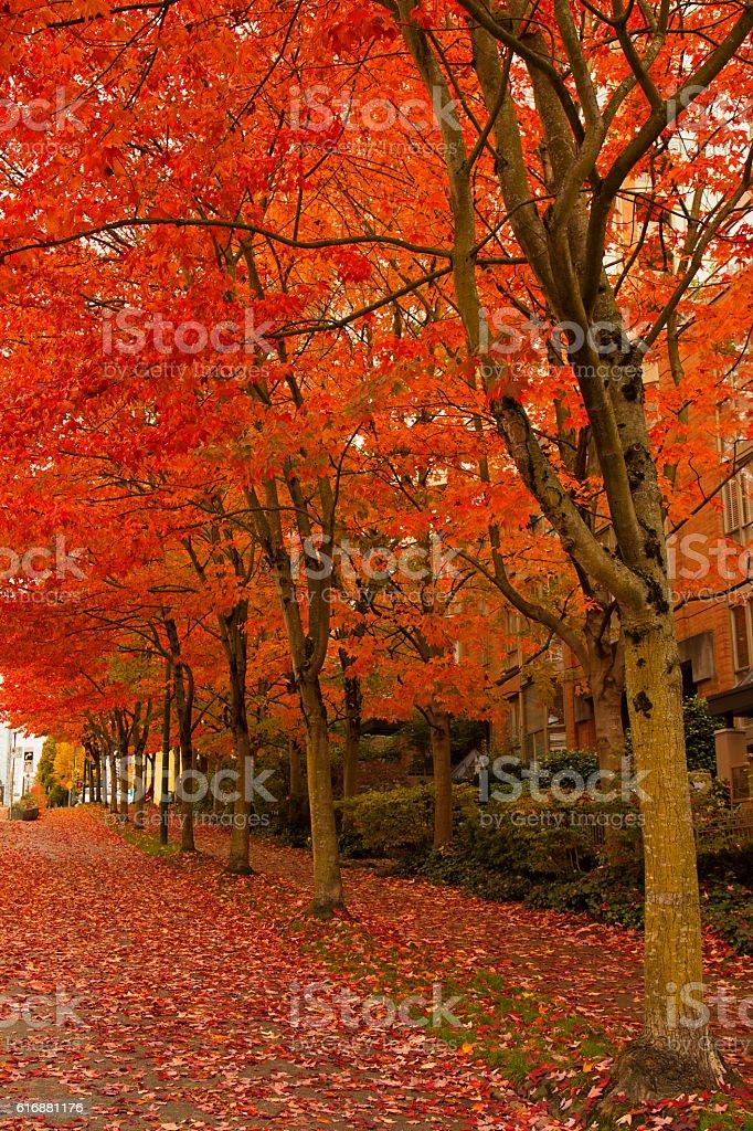 Redd trees on the street stock photo