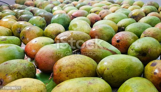 Reddish yellow and greenish ripe alphonso mangoes bunch for sale