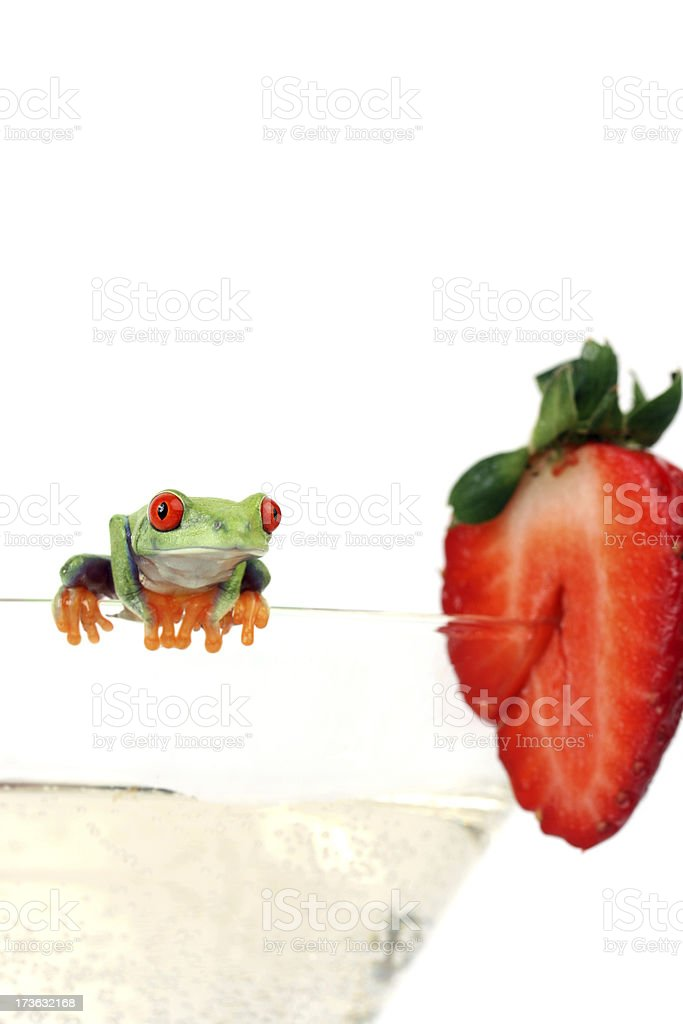 Red-eyed frog on  glass of champagne with strawberry royalty-free stock photo