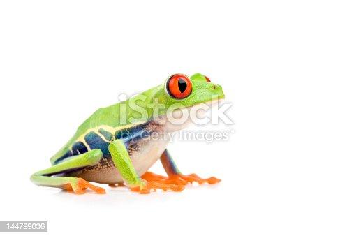 http://www.alptraum.us/LB_frogs.jpg