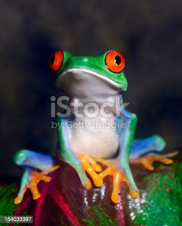 istock Red-Eyed Tree Frog 154033397