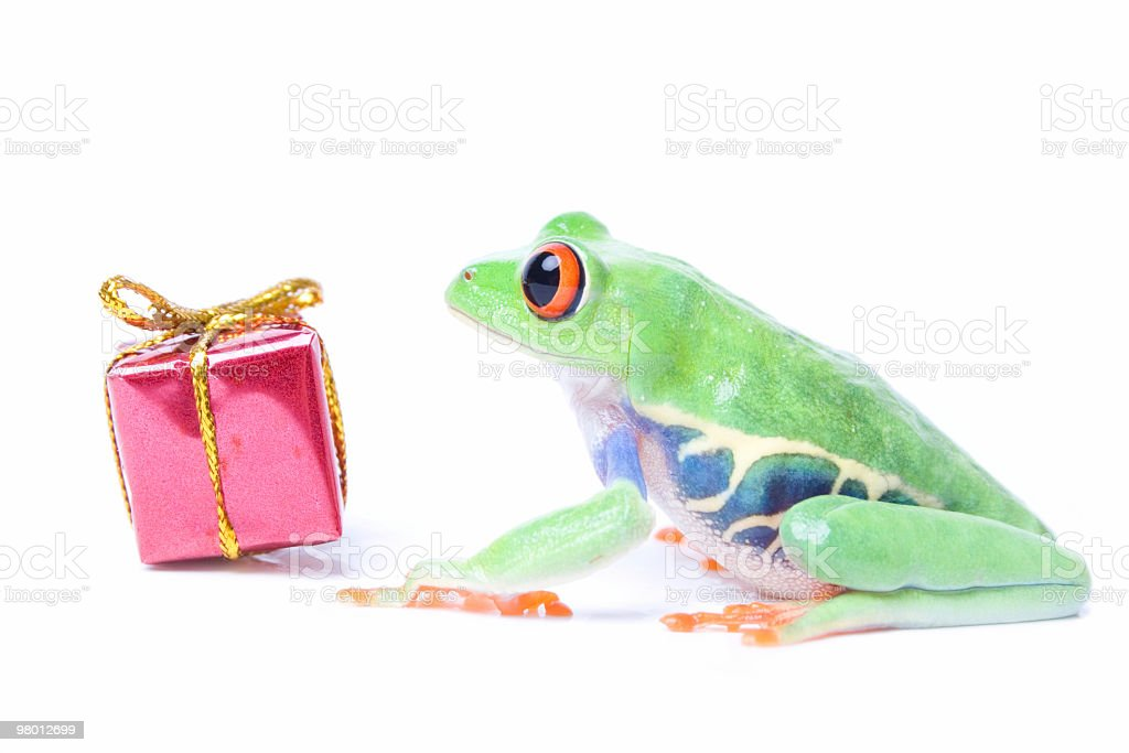 Red-eyed tree frog royalty free stockfoto