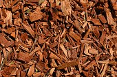 Eucalyptus mulch texture background