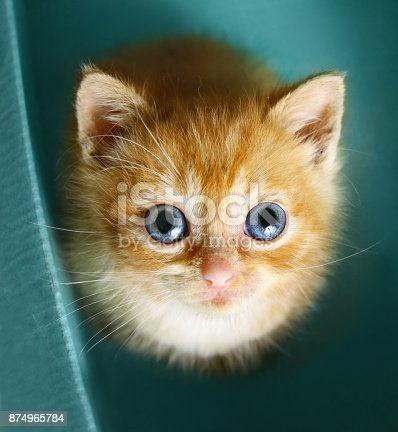 istock red-haired kitten look up sit in the cupboard box 874965784