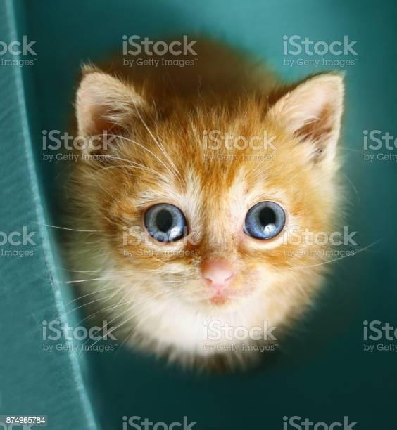 Redhaired kitten look up sit in the cupboard box picture id874965784?b=1&k=6&m=874965784&s=612x612&h=jm6rqd4rela7ssgss efntsznnypk4vwaurnxr8uieu=