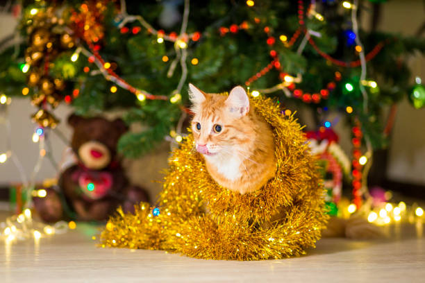 Redhead adult cat near a christmas tree with garlands picture id1078377616?b=1&k=6&m=1078377616&s=612x612&w=0&h=qngz mlkptjo981ajtj8qbnw4f 3doftxza hqqnr20=