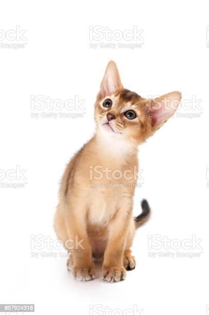 Redhead kitten abyssinian playing picture id857924318?b=1&k=6&m=857924318&s=612x612&h=lcmxk kghdrwv j qxhn djtic1scl0editrfa1 7iq=