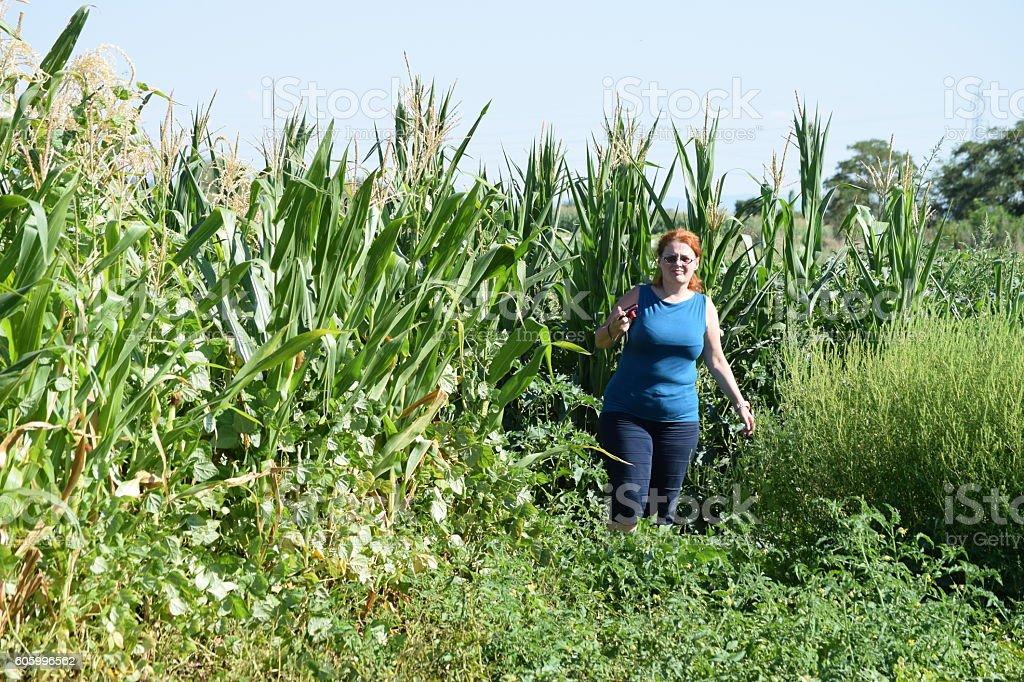 Redhead woman in the corn field stock photo