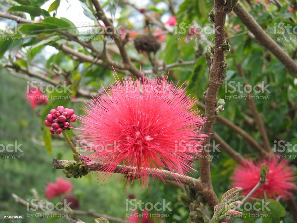 Red-pink flower royalty-free stock photo
