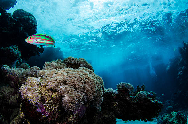RedSea Fish and coral stock photo