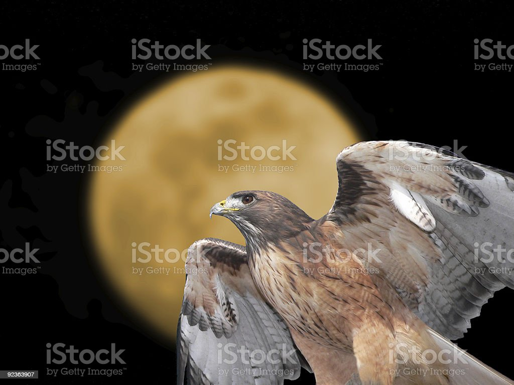 Red-tailed Hawk with moon background royalty-free stock photo